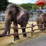 網站熱門文章:沖繩中部景點兒童王國(沖縄こどもの国) 近距離接觸大象和各種動物