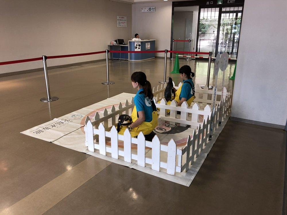 廣島│宮島必遊親子景點推薦 宮島水族館 與企鵝的親密接觸
