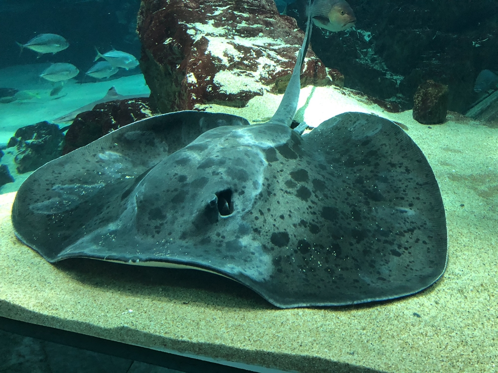 九州景點 福岡親子景點 海之中道水族館 Marine World