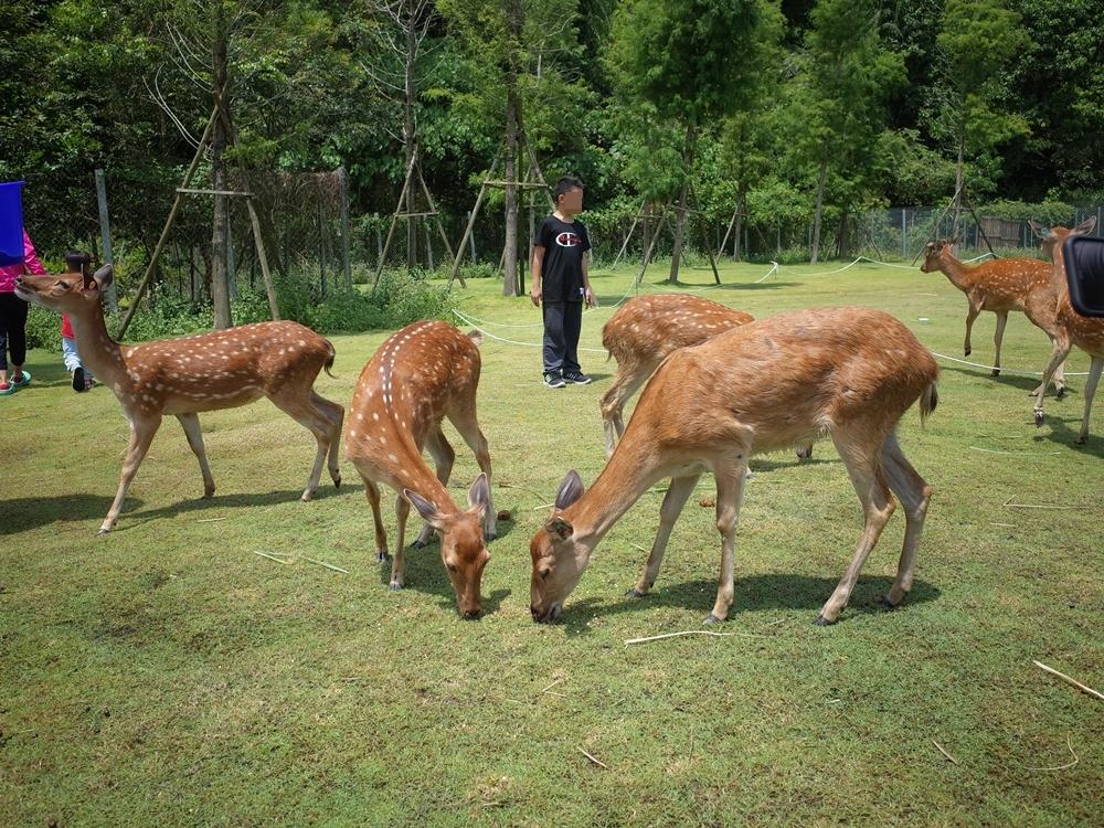 宜蘭景點│斑比山丘,台版奈良小鹿、可餵食、網美打卡景點,開放線上預約