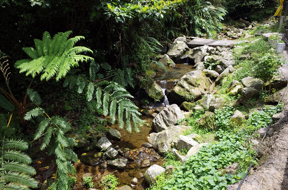 新竹關西│小蜜蜂休閒咖啡屋露營區 海拔570 小木屋零裝備輕裝備包區的好選擇 夏天開放水池有小溪流