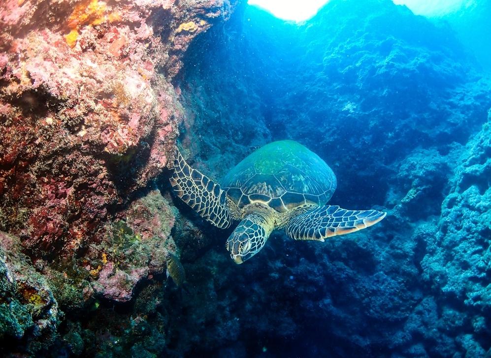 小琉球潛水│不會游泳也可以潛水,小琉球潛水初體驗分享